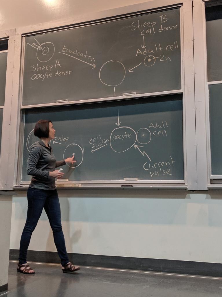 Robin teaching